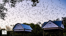 pic of bat houses