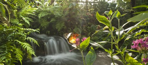 butterflyrainforest